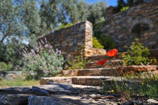 Kostenloses Stock Foto zu stufen, landschaft, natur, blumen