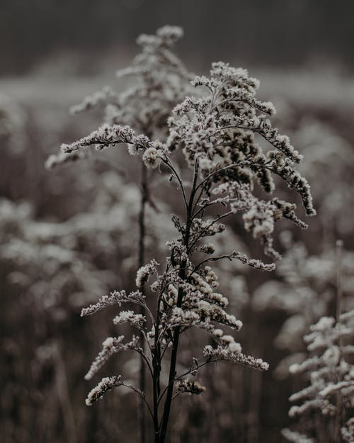 Thin stems of dried plants with delicate flowers growing in field with abundance of growing vegetation on blurred background in nature
