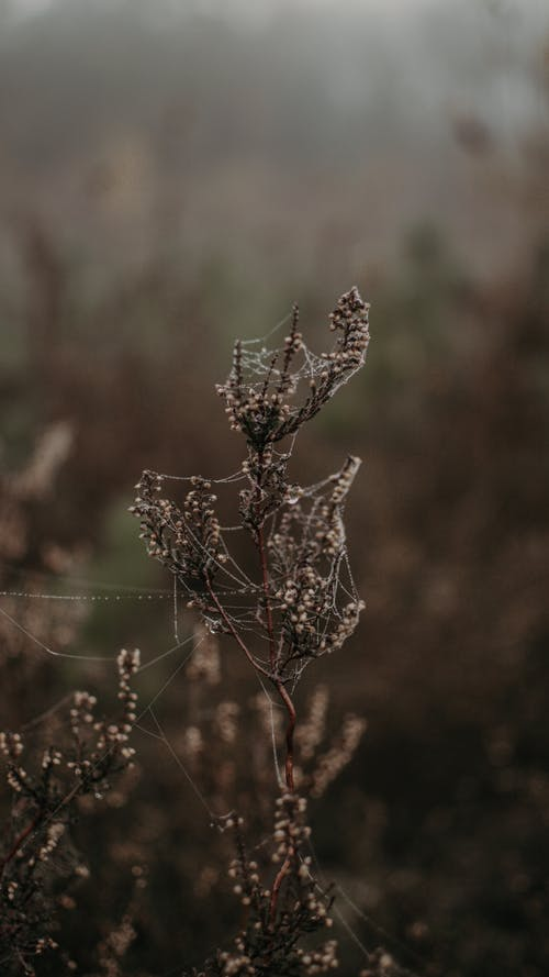 Dry plants with cobweb in nature