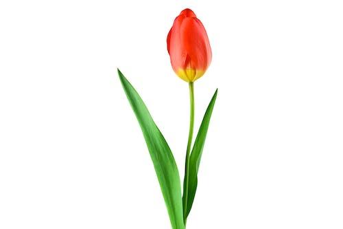 廠, 植物, 植物群, 綻放 的 免費圖庫相片