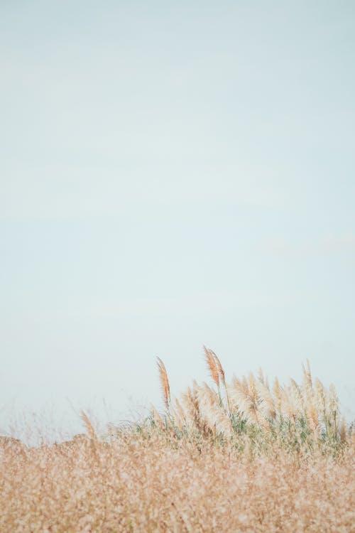 Foto stok gratis alam, bagus, batang