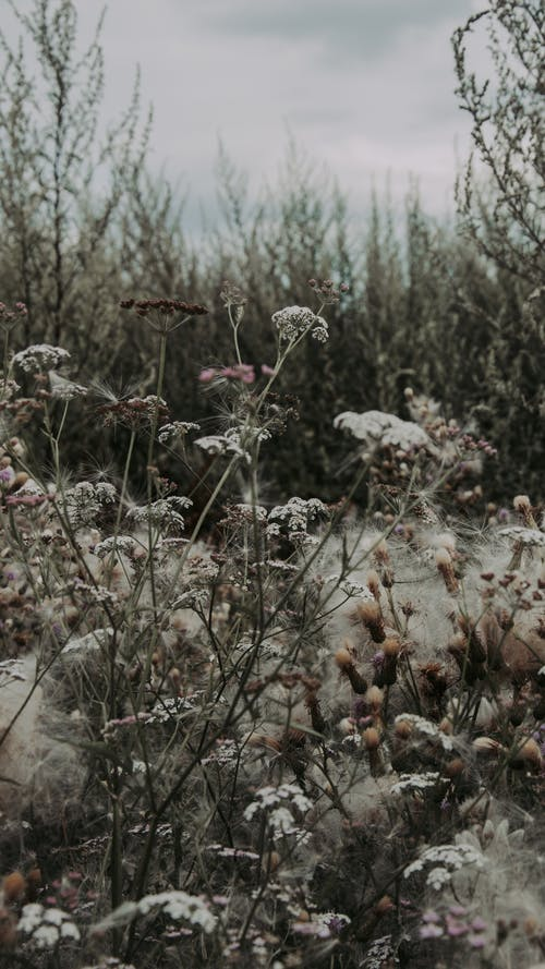 Wildflowers growing in nature in foggy weather