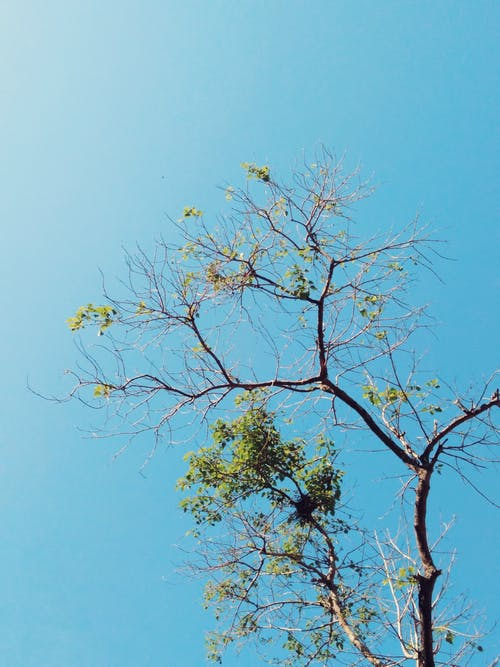 Free stock photo of blue sky, bright sky, green leaves