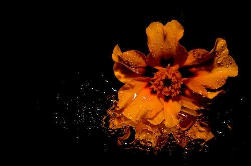 Základová fotografie zdarma na téma cákání, flóra, HD tapeta, kvést