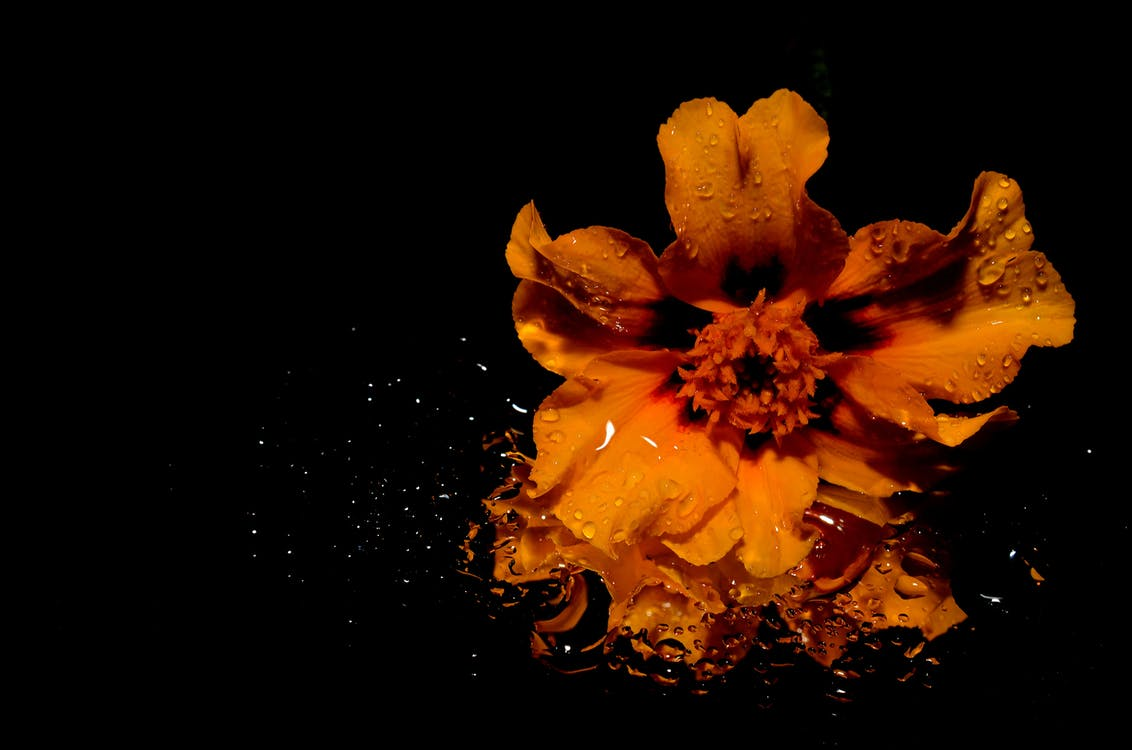 Orange Flower Illustration