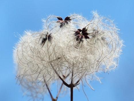 White Flowers Under Blue Sunny Sky