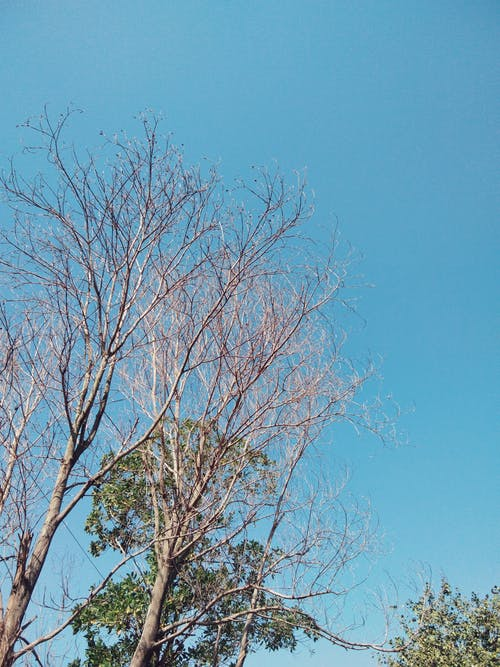 Free stock photo of blue sky, bright sky, clear sky
