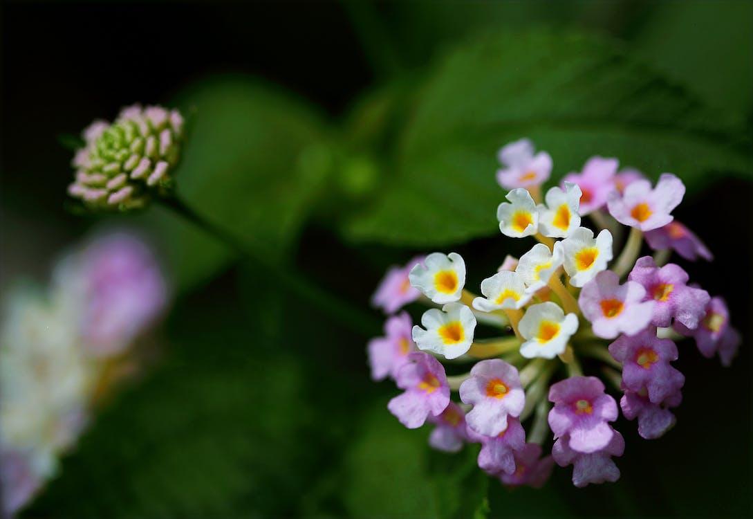Bahçe, bitki, bulanıklık
