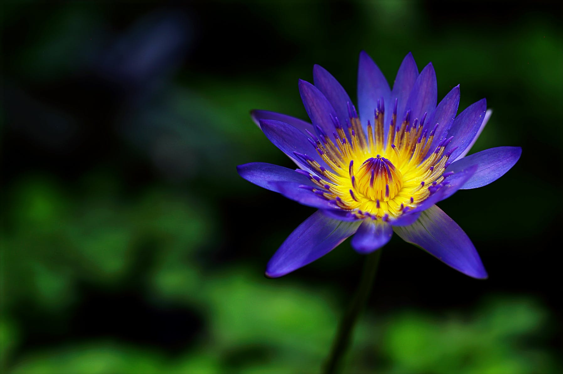 Fotos de stock gratuitas de bonito, brillante, color, crecimiento