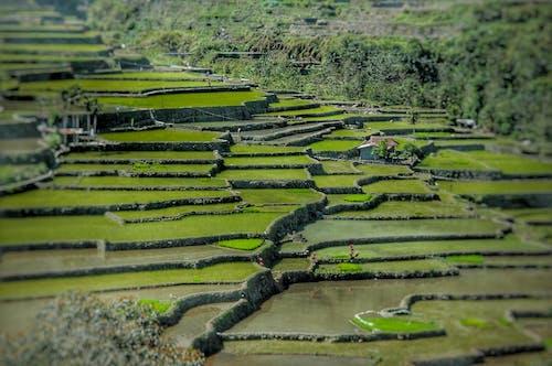 Kostnadsfri bild av åkermark, Asien, beskära, bondgård