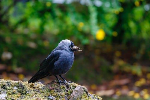 Imagine de stoc gratuită din animal, aripi, birdwatching