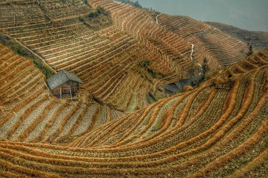 Brown Rice Terraces View