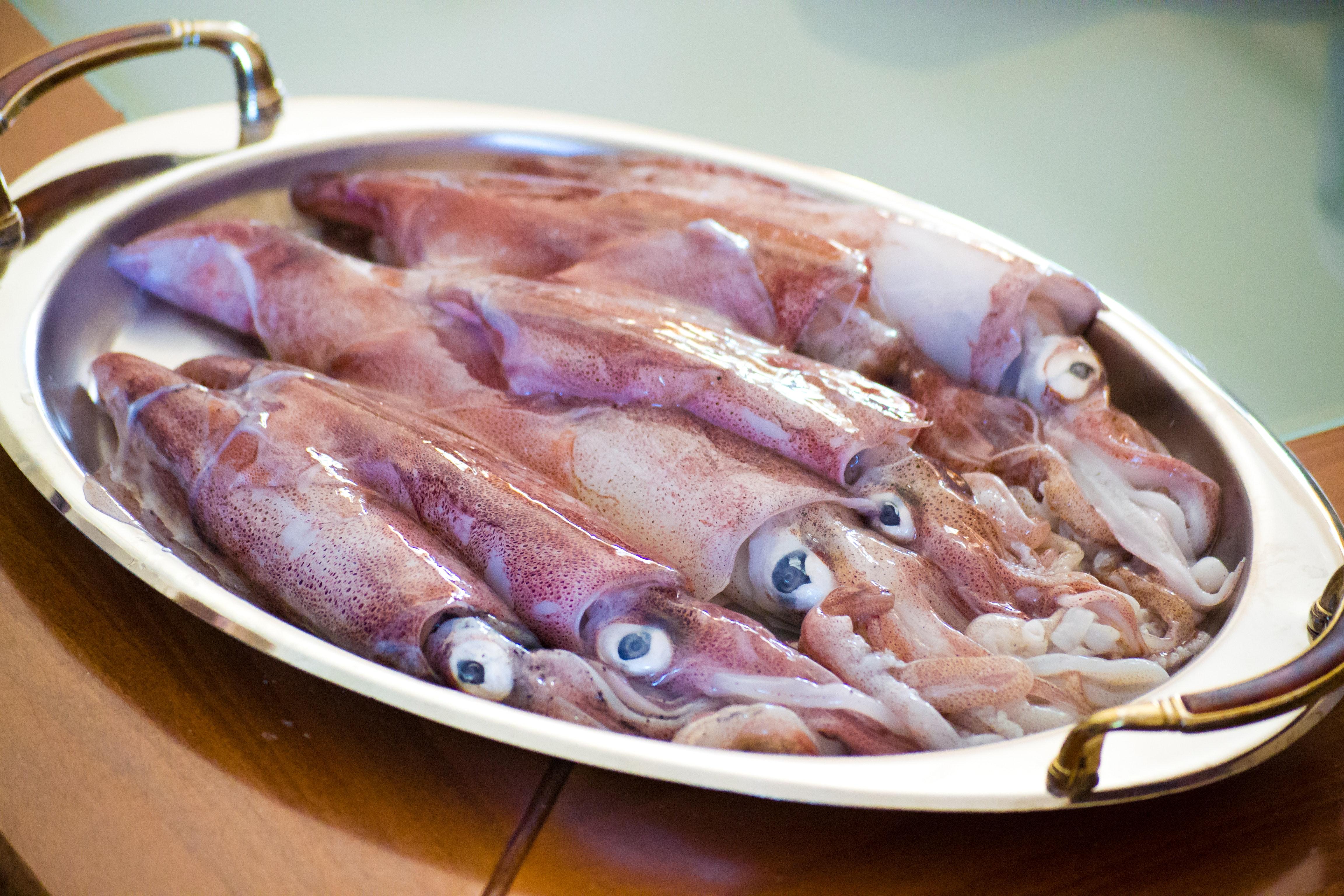 Risultati immagini per immagini calamari