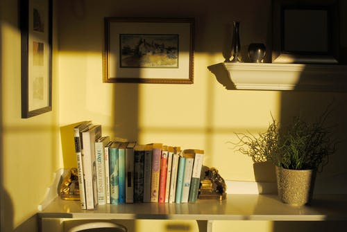 Shelf with books souvenirs and verdant potted flower in room corner in sunlight