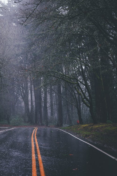Empty straight roadway with yellow double solid stripe running among leafless trees in gloomy autumn day