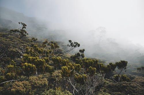 Photos gratuites de bornéo, forêt nuageuse, forêt tropicale