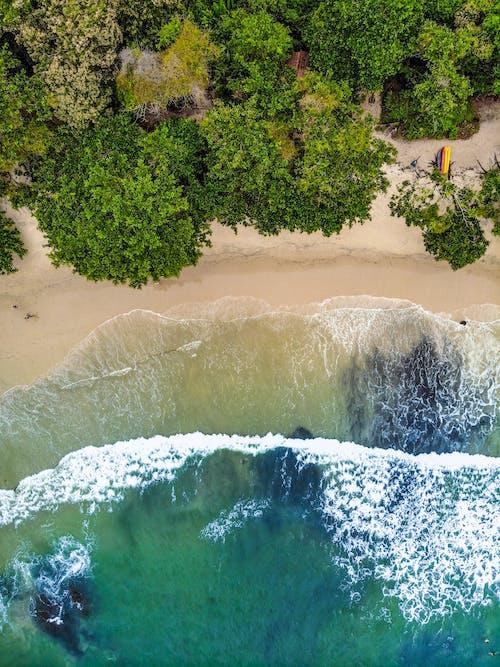 Photos gratuites de à distance, aérien, arbre