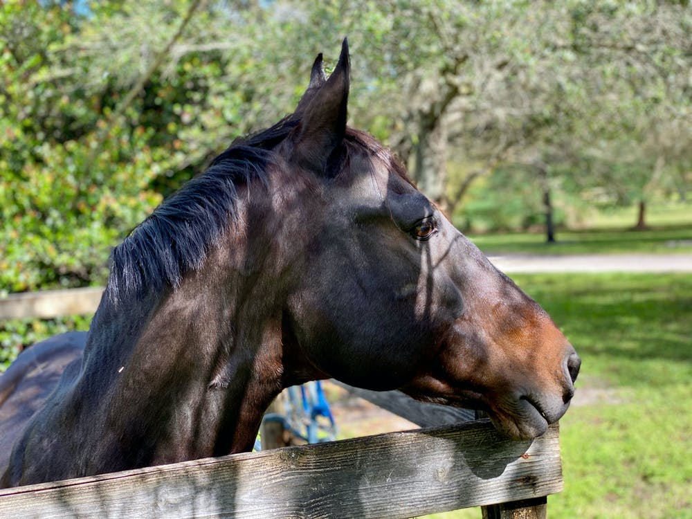 Bricole-Reincke-Equestrian-Horse