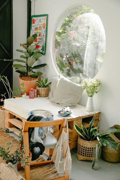 Photos gratuites de à l'intérieur, botanique, brouiller
