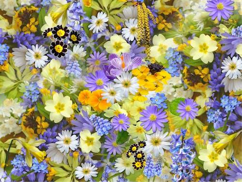 Ảnh lưu trữ miễn phí về cây, hệ thực vật, Hình nền HD, hoa