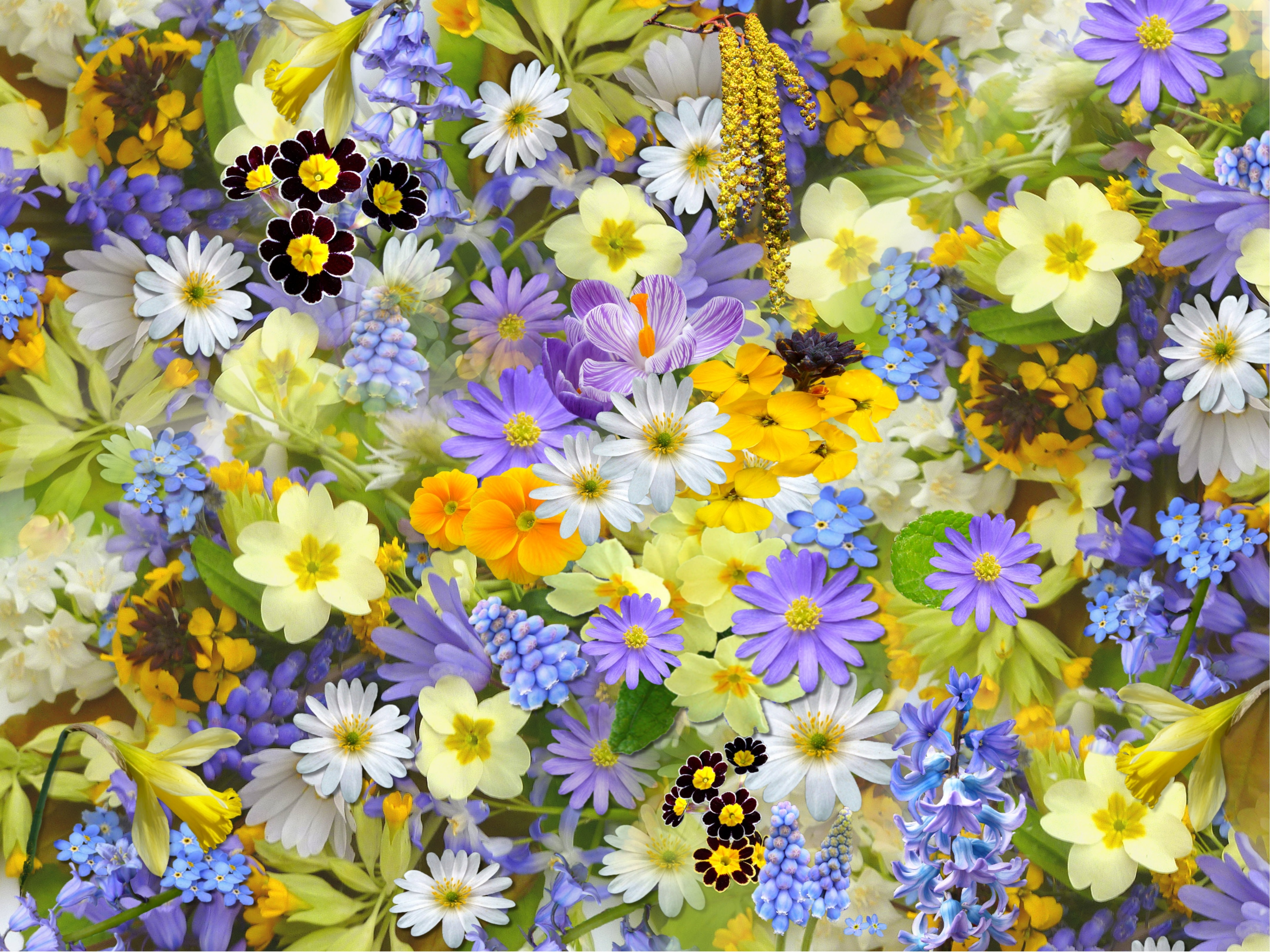 Bed of Flowers · Free Stock Photo