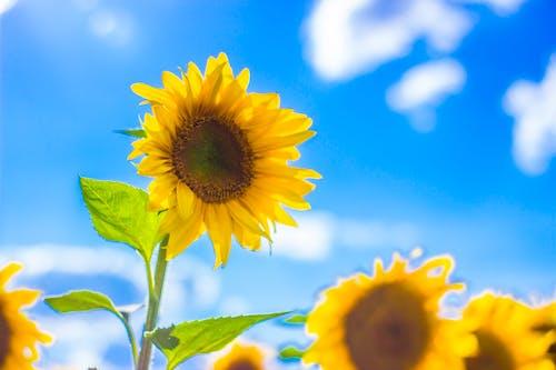 Kostnadsfri bild av blå, fält, grön, gul