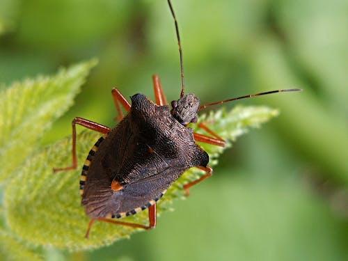 宏觀, 昆蟲, 特寫 的 免費圖庫相片