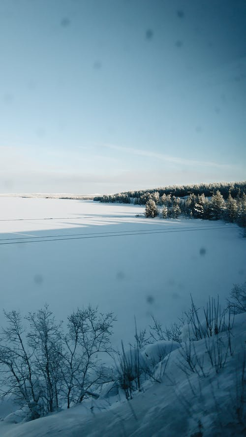 Frozen lake placed near coniferous forest covered with snow located in countryside under cloudless blue sky in sunny day