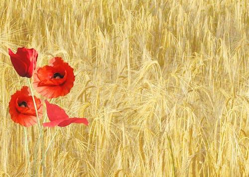 alan, bitki örtüsü, bitkiler, çiçek içeren Ücretsiz stok fotoğraf