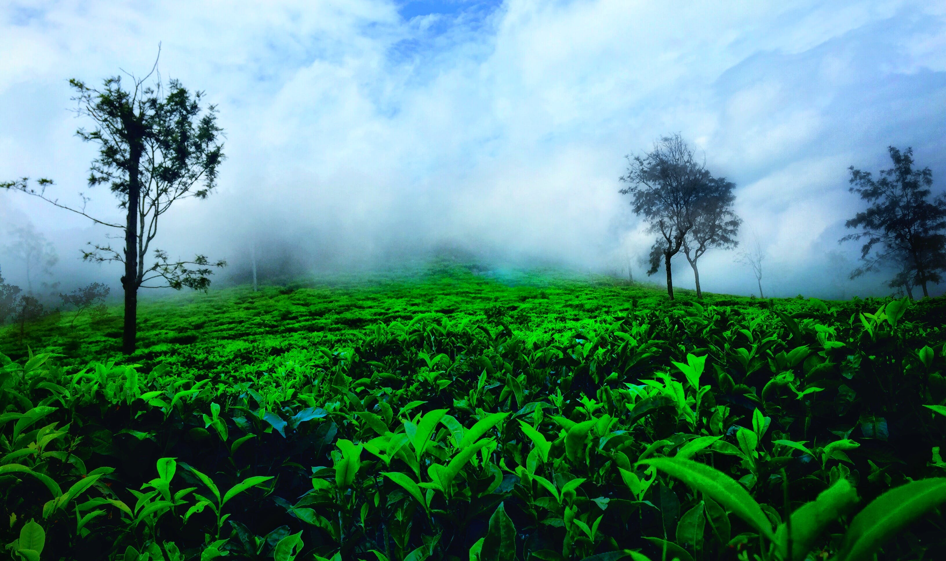 Free stock photo of #India #ooty #nature #green #clouds #mist #peace