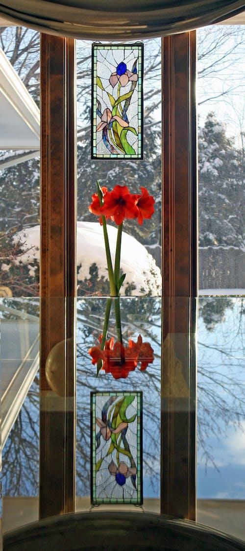 Δωρεάν στοκ φωτογραφιών με Αμαρυλλίς, αντανάκλαση