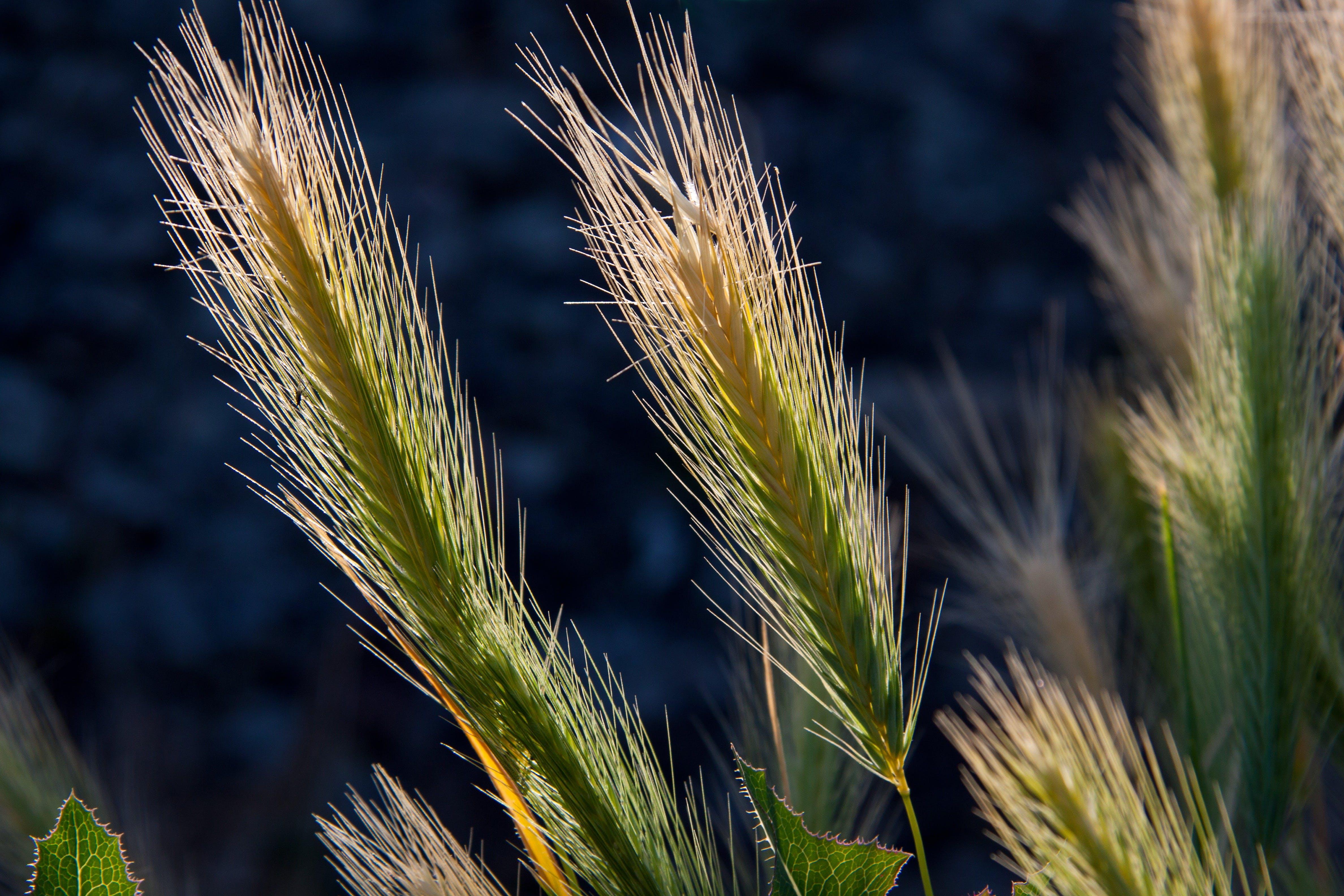 Green Cattail Plant