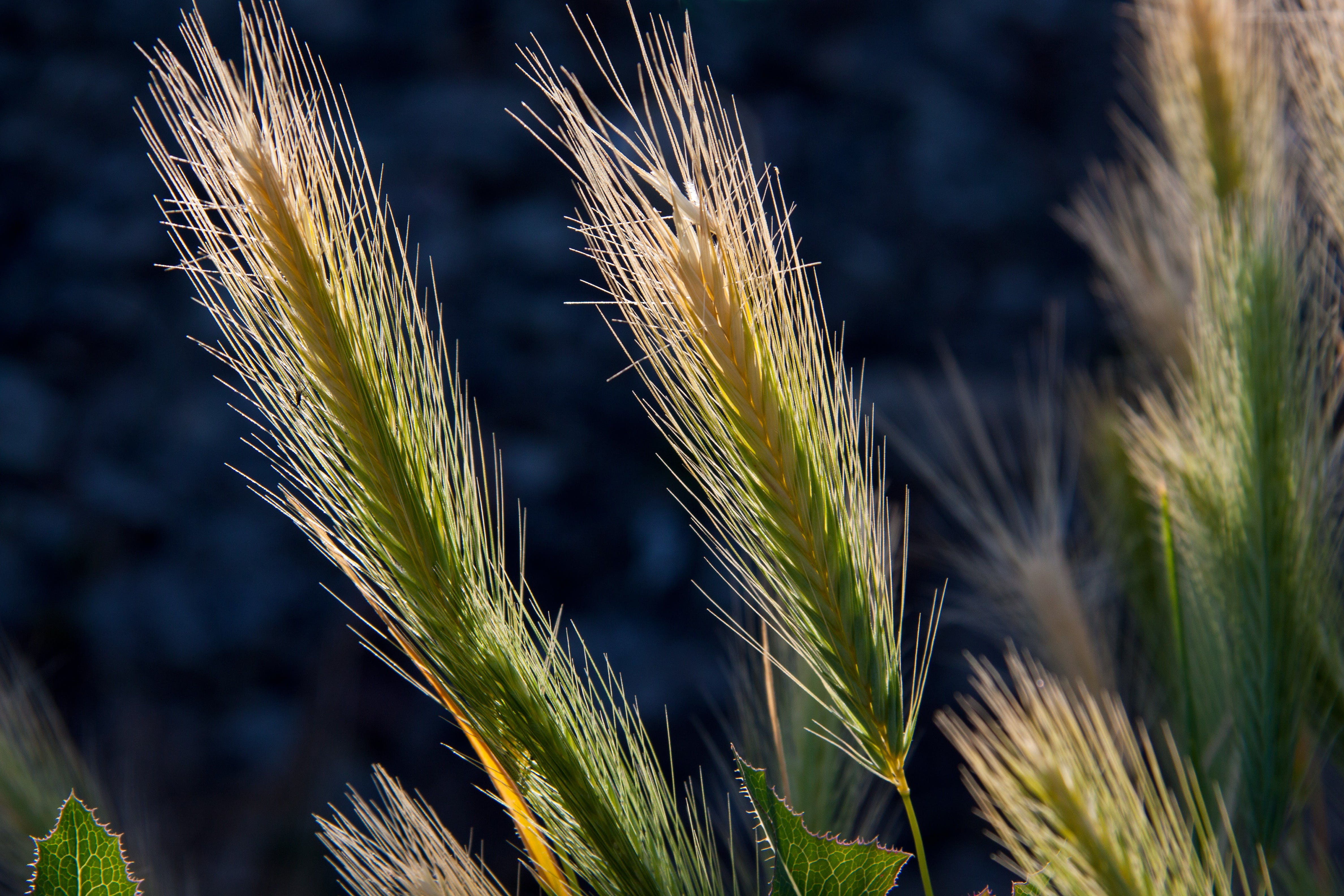 Free stock photo of agriculture, blur, plants, macro
