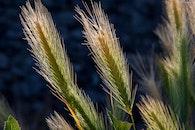 agriculture, blur, plants