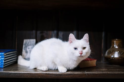 White Cat With Blue and Green Eyes