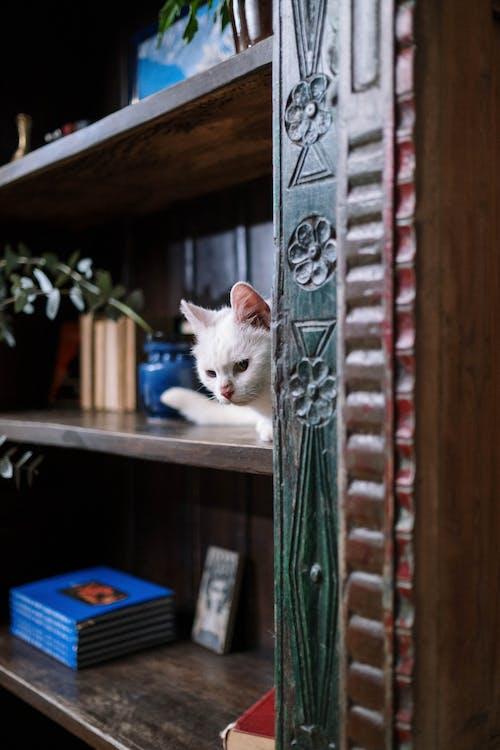 White Cat on Wooden Shelf