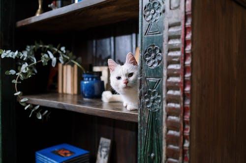 White Cat on Brown Wooden Shelf