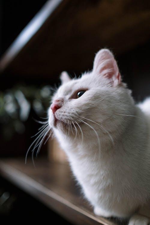 かわいらしい, キティ, ネコの無料の写真素材