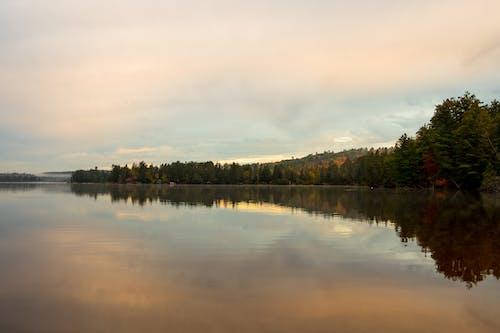 Free stock photo of calm, nature, trees