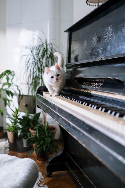 White Cat on Piano