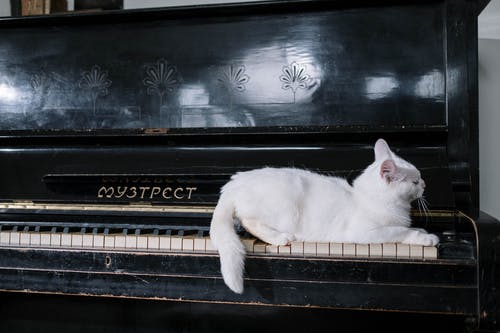 Cat on Black Piano