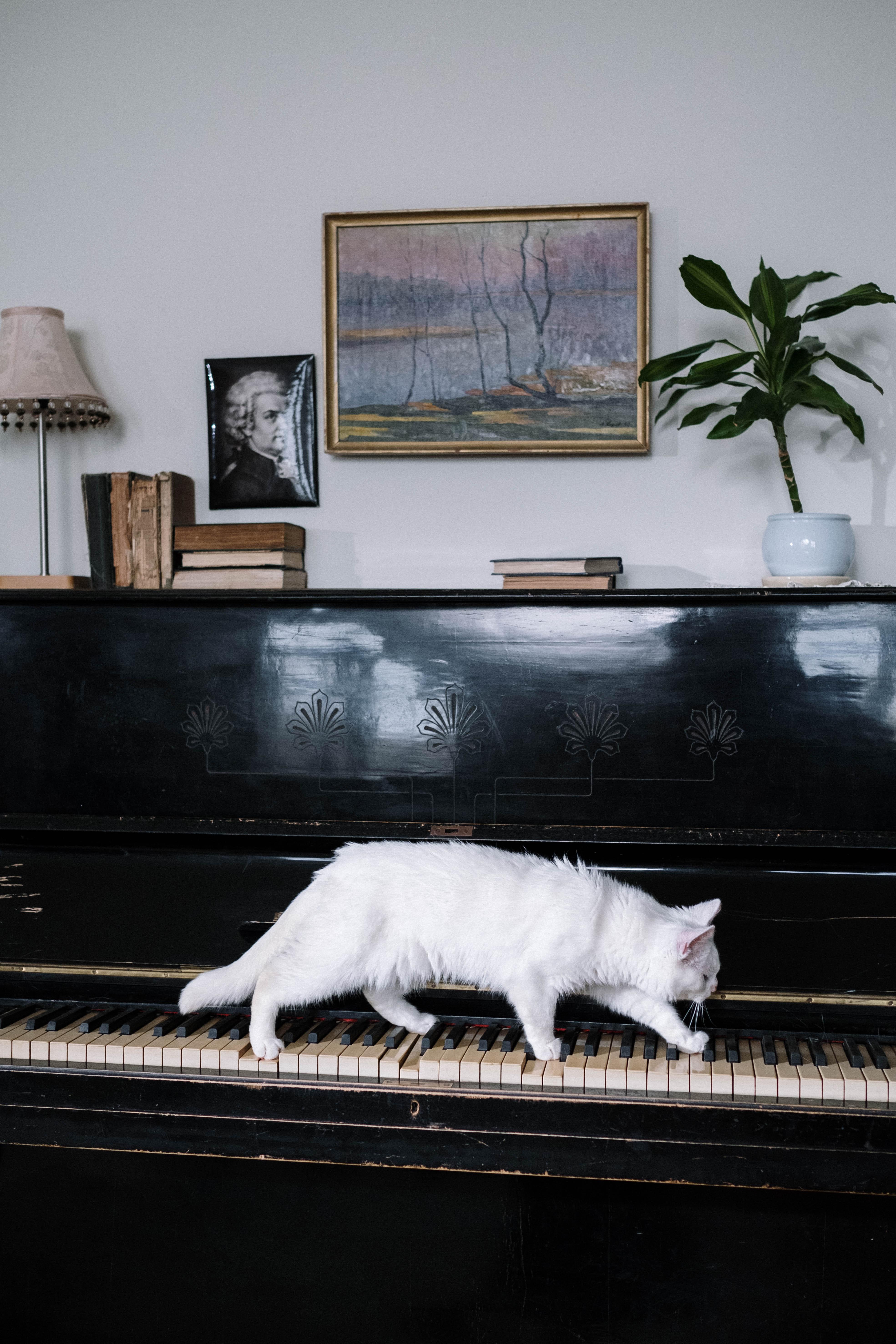 White cat walking on keyboard of upright piano.
