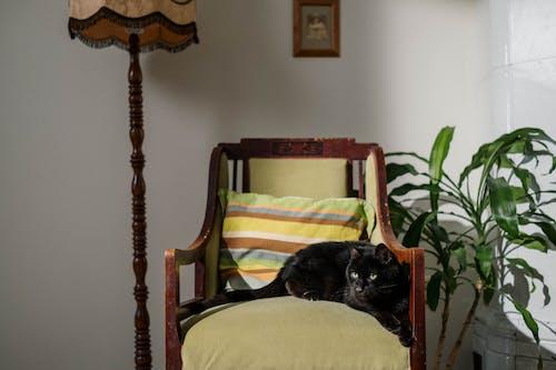 Black Cat on Green Chair