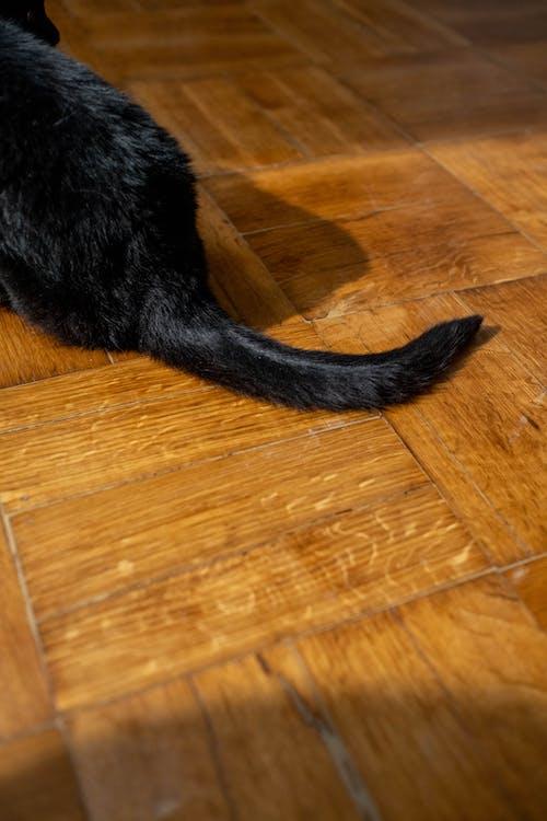 Black Cat on Brown Wooden Floor
