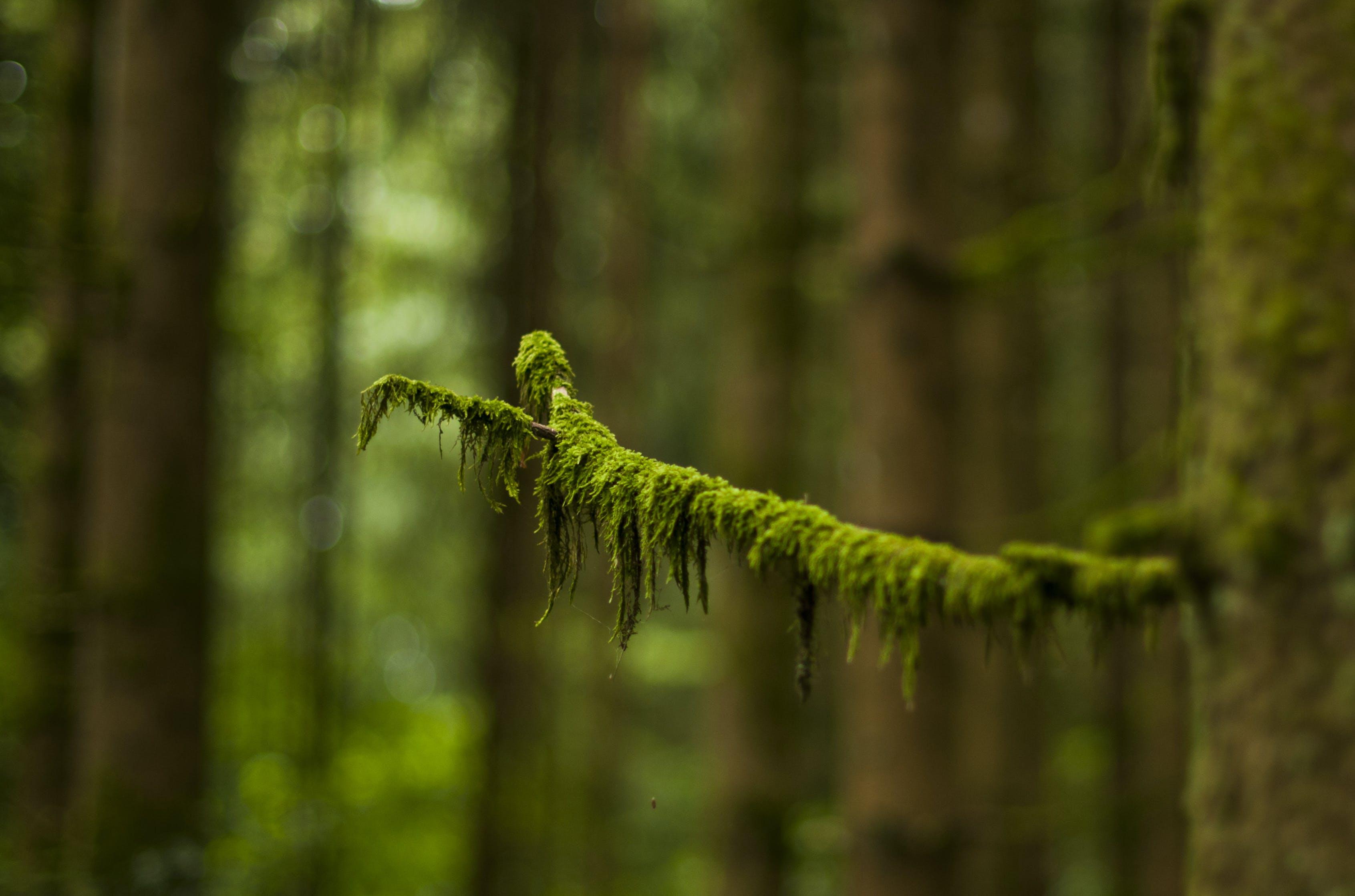 Macro Photography of Green Leaved Tree