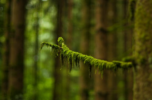 Macro Photography of Green Leaved Tree