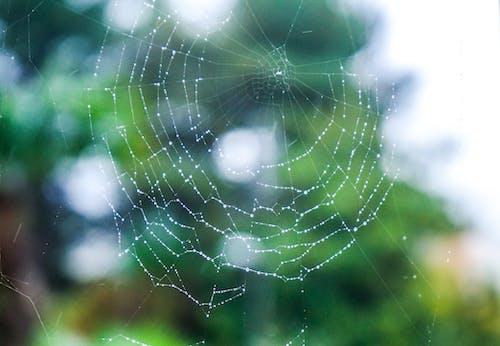 天性, 昆蟲, 森林, 水 的 免费素材照片