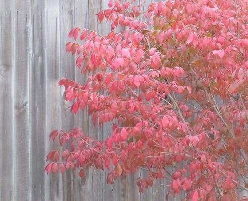 Δωρεάν στοκ φωτογραφιών με πεσμένα φύλλα