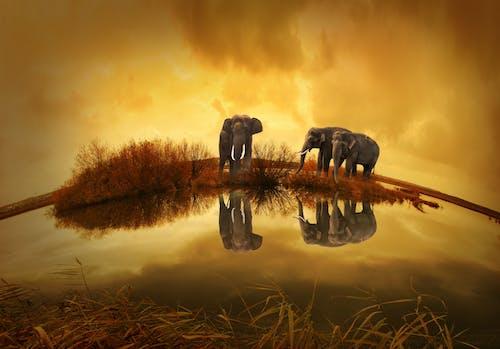 Бесплатное стоковое фото с вода, животные, кусты, облака