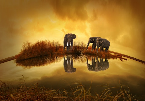 3 Grey Elephants Under Yellow Sky